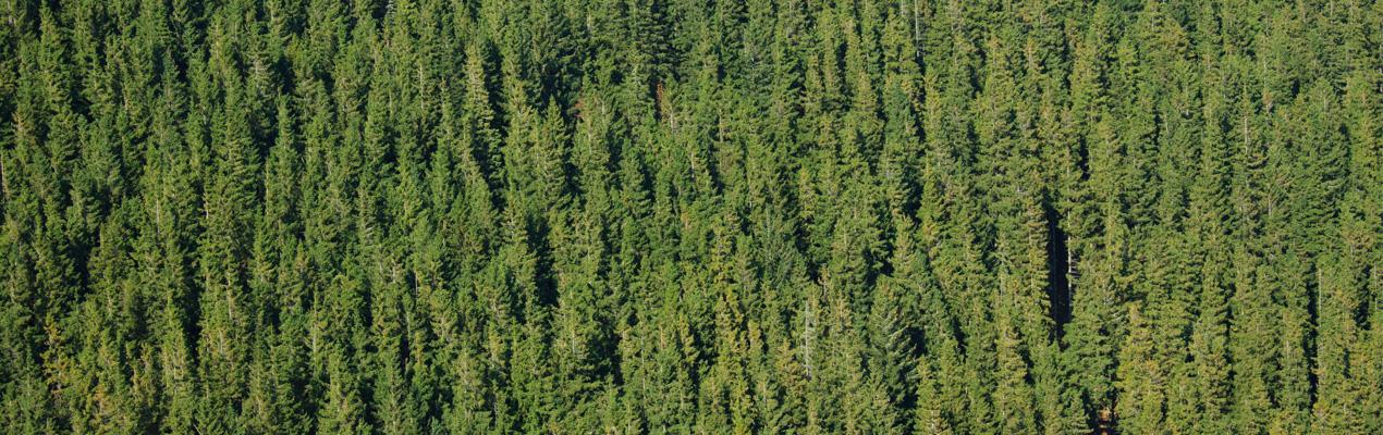 V lesnictví poctivě